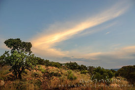 Boomerang shaped cloud above protea trees and veld