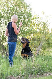 Blond Lady Training Rottweiler Dog to Sit