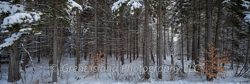 NH landscape photography; New Hampshire landscape photography; New Hampshire woods, NH woods, Winter woods