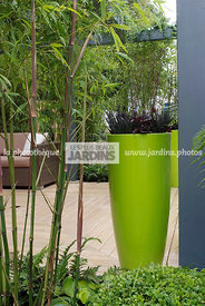 Pot design vert sur une terrasse. Phyllostachys sp. (bambou). Paysagiste : Roger Smith. HCFS, Angleterre