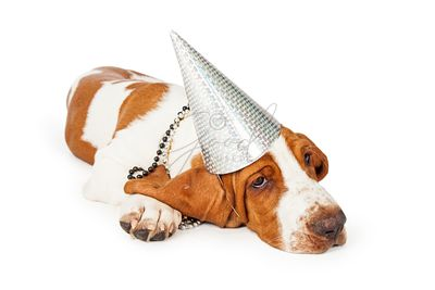 Basset Hound Dog Wearing Silver Party Hat