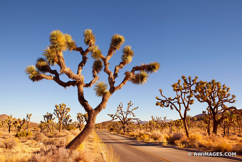 Joshua Tree National Park California - Color & Black and White - All Photos