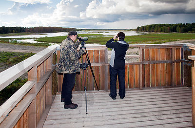 Bird Watching from Observation Tower