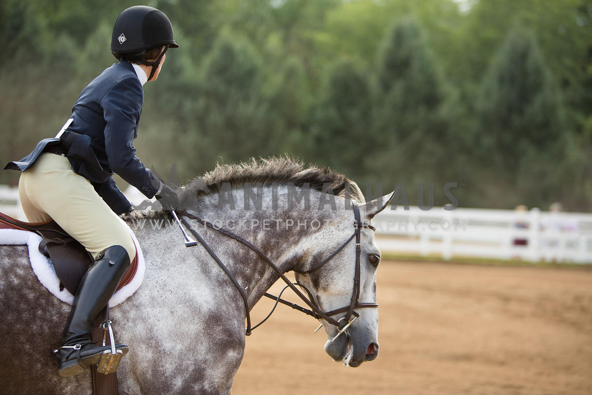 horse in english tack under saddle at horse show