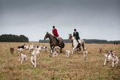 Huntsman and pack of hounds in field.