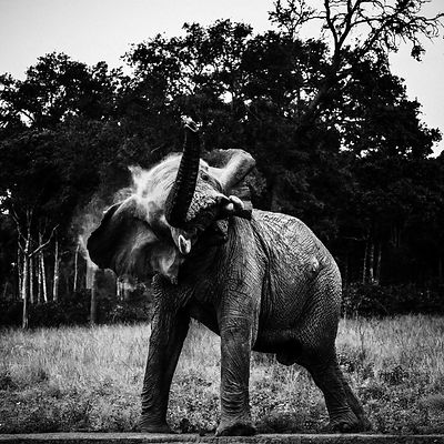 00642-Elephant_Laurent_Baheux