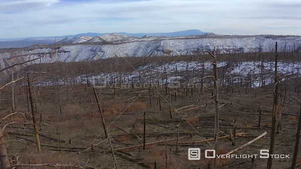 Forest fire damage in the Bandelier National Monument area, New Mexico
