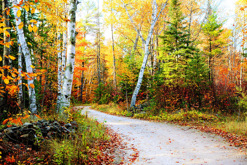 AUTUMN FOREST ROAD DOOR COUNTY WISCONSIN FALL COLORS