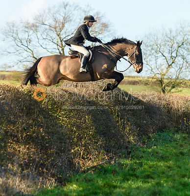 Alice Robb Jumping a big drop hedge.The Quorn at Barrowcliffe